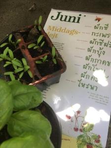 almanackan med blad omkring